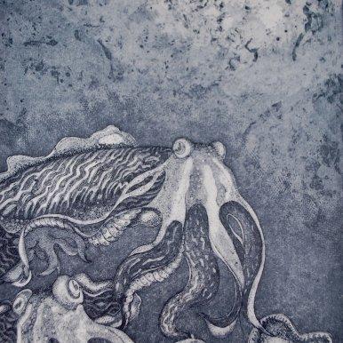 Buy Cornsh Art Beth Munro Cuttlefish And Divers