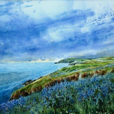 Coast Path Bluebells