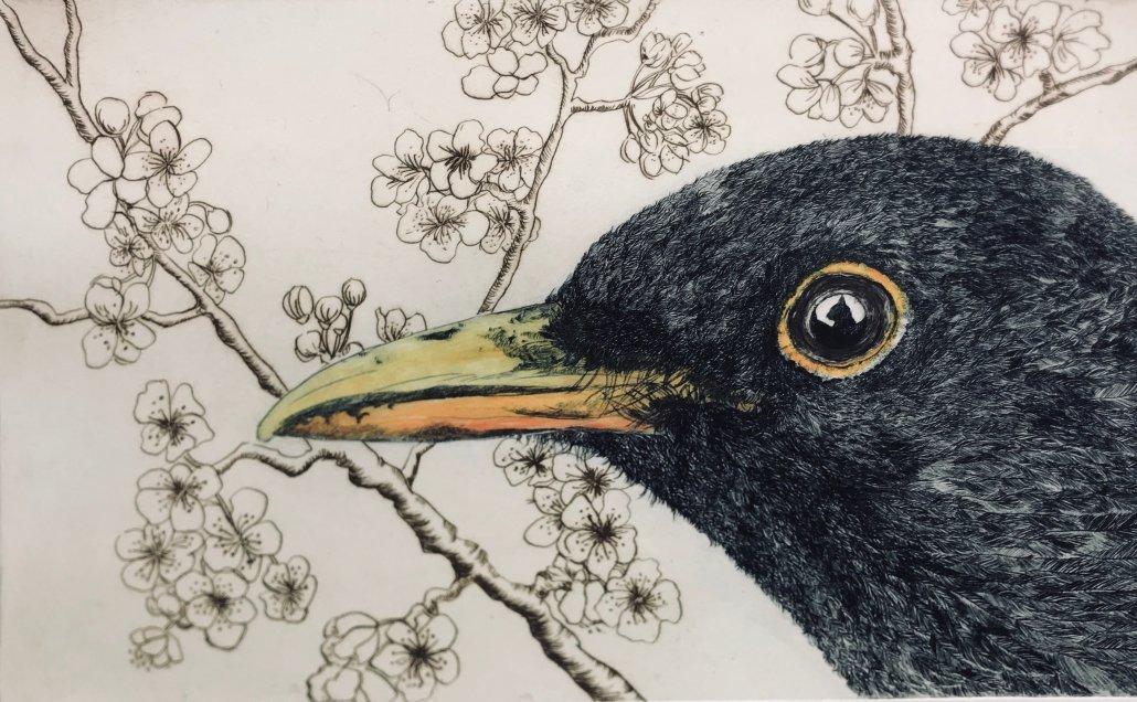 Buy Cornish Art Beth Monro Blackbird
