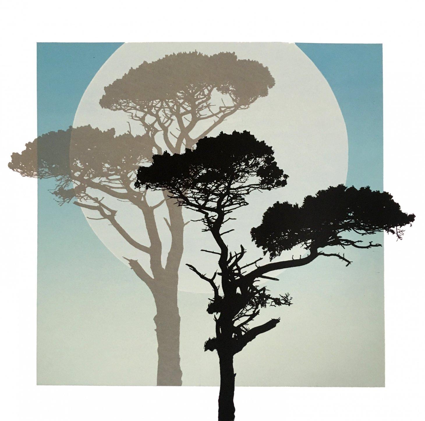 Buy Cornish Art Graham Black Moonshadowpines Primary