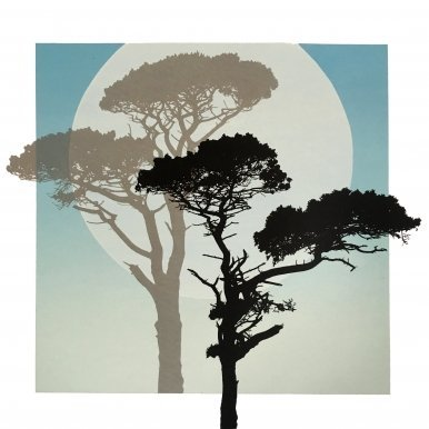 Buy Cornish Art Graham Black Moonshadowpines Primary
