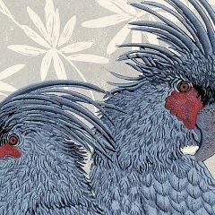 Buy Cornsh Art Beth Munro Grey Palm Cockatoo Detail